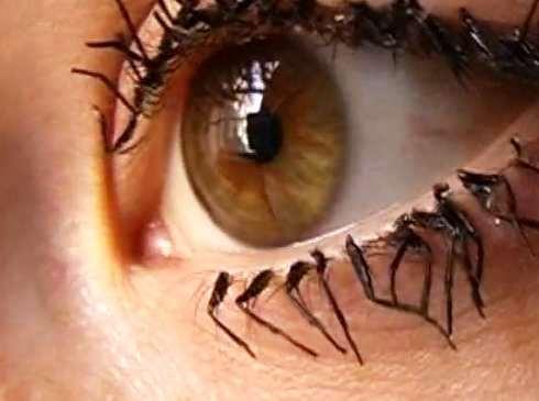 cilios.pernas.de.moscas.arte